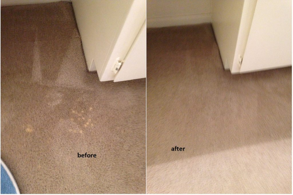spot dying bleach spill on carpet