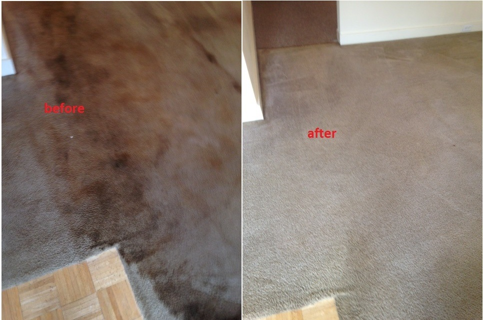 very dirty carpet cleaners cleaned with rotary extraction