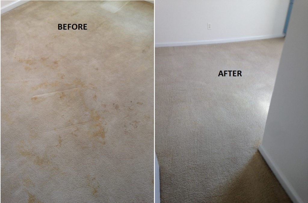 Carpet cleaning pet stain removal