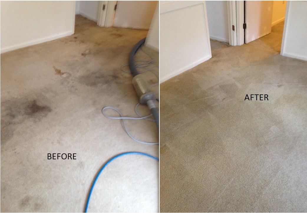 Carpet Cleaning Service Savannah Islands Cleaners
